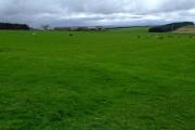 Farmland at Spittal Mains