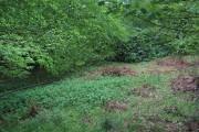 Woods, Abercariny