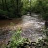 River Lemon in Broadridge Wood