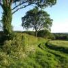 Field boundary by Lodge Lane