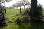 Near East Hoe Manor, Hambledon