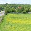 Field by Orestan Lane