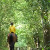 Riding in Great Ridings Wood