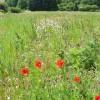 Set-aside Field, Effingham