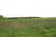 Eshott Home Farm plantation