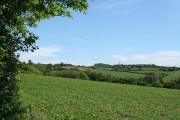 Chittlehampton: above Bray Wood