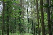 Hampt Woods