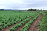 Potato Field, and Crowgreaves, Shropshire