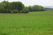 Farmland and copses, Watchfield