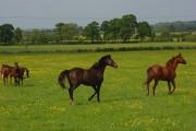 Horses at Highworth