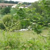 Hedgerow plants