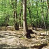 The Forest, Effingham Junction