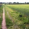 Field edge footpath near Dunham Town