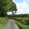 Broadwoodwidger: lane to Coombe Mill