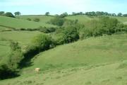 Farmland at South Coombe, Devon