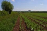 Farmland, Littleworth