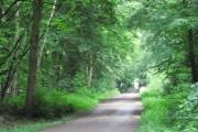Cross Riding, Sandall Beat Wood