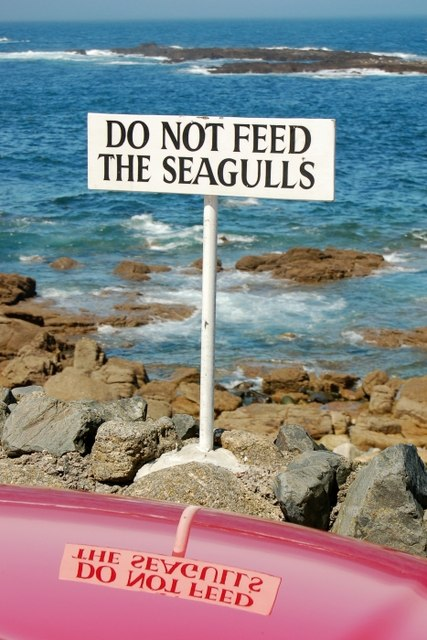 Do not feed the seagulls ......