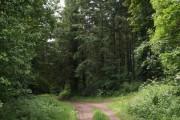 Homeland Wood