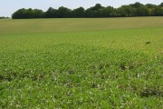 Farmland, Durrington