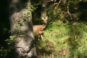Woodland, Taynish Peninsula