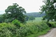 Farm Track and Fields, Shirlett, Shropshire