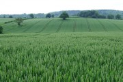 Wheat Field, near Willey, Shropshire