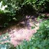Stream in Dallington Forest