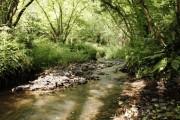 Small River near High Bickington