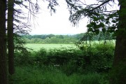 Out of the Woods, Shropshire