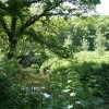 Virginstow: river Carey