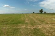 Hay meadow, Milston