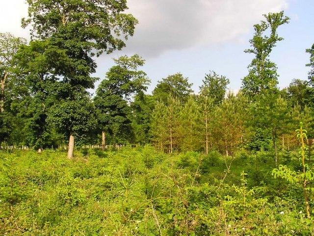 Oakley Wood