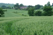 Wheatfield near Willey, Shropshire
