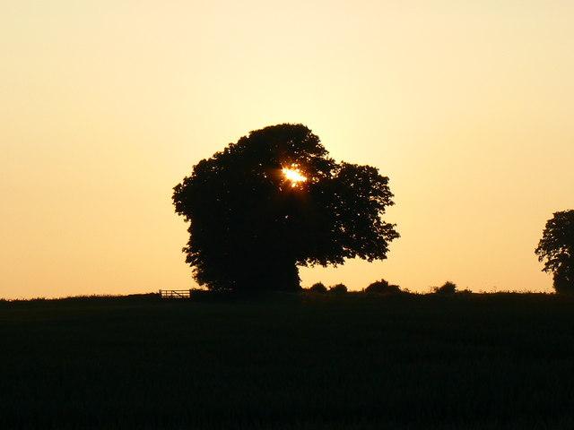 Tree, near Lower End, Gloucestershire