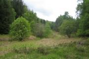 Harbottle Wood near Harbottle