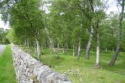 Wood near Sharperton