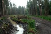 Langsett Woods Track