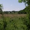 Field beside River Carey