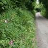 Twitchen:  lane near Headgate
