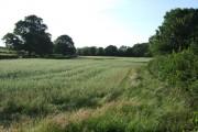 Field beside the Okement