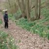 Steep Woodland Path on the How Caple Estate