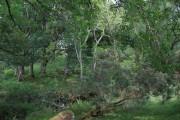 Coed Graienyn