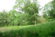 Reeds, bracken and woodland near Graienyn