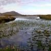 Water Lilies in Loch nan Geadh