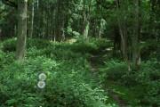 Footpath through Badnage Wood