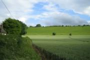 Wheat field, Sherrington