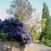 Bodenham village road