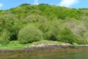 Woodland, Carn Breagach