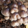 Fungi in the woods at Woodhall Spa